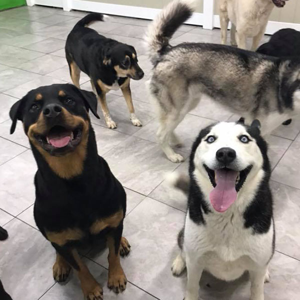 two dogs sitting with their tongues out with other dogs walking in the background