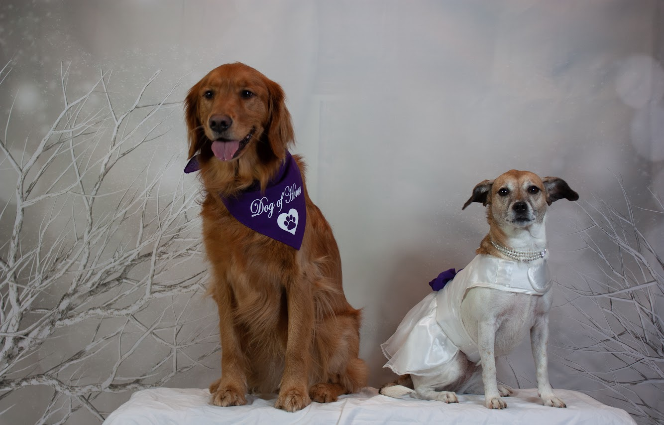 Doggie Day Care Wedding at Hounds Town USA
