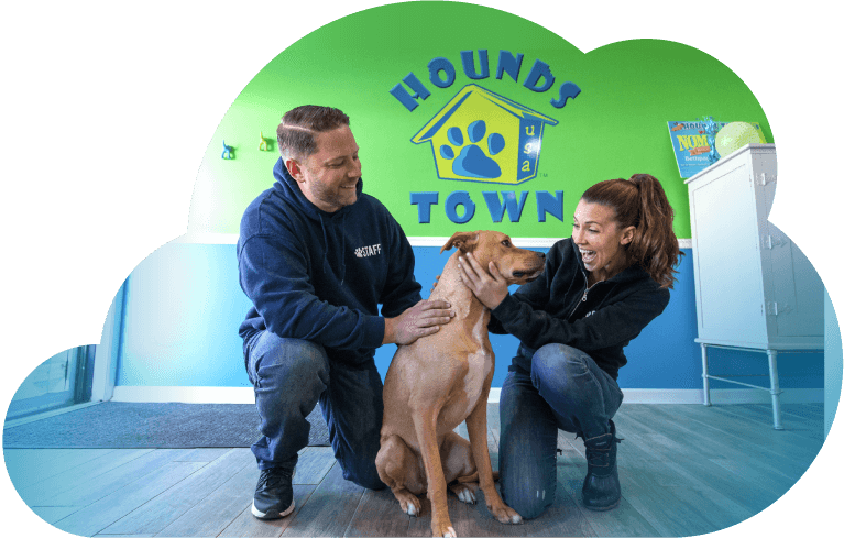 Dog Care Services Pet Doggie Daycare And Boarding Hounds Town Usa
